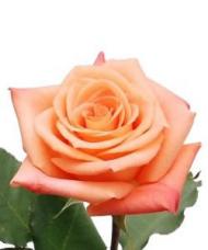 1 Trandafir Portocaliu